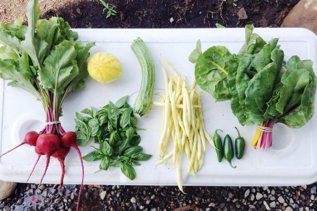 An example of a CSA share from Schoolyard Farms.