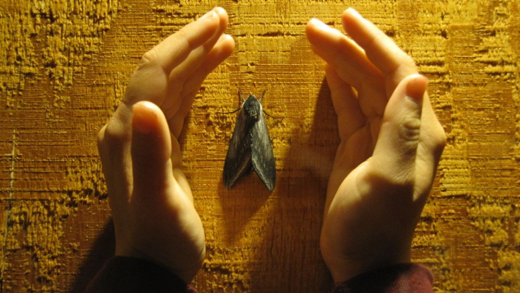 Hands Around a Moth