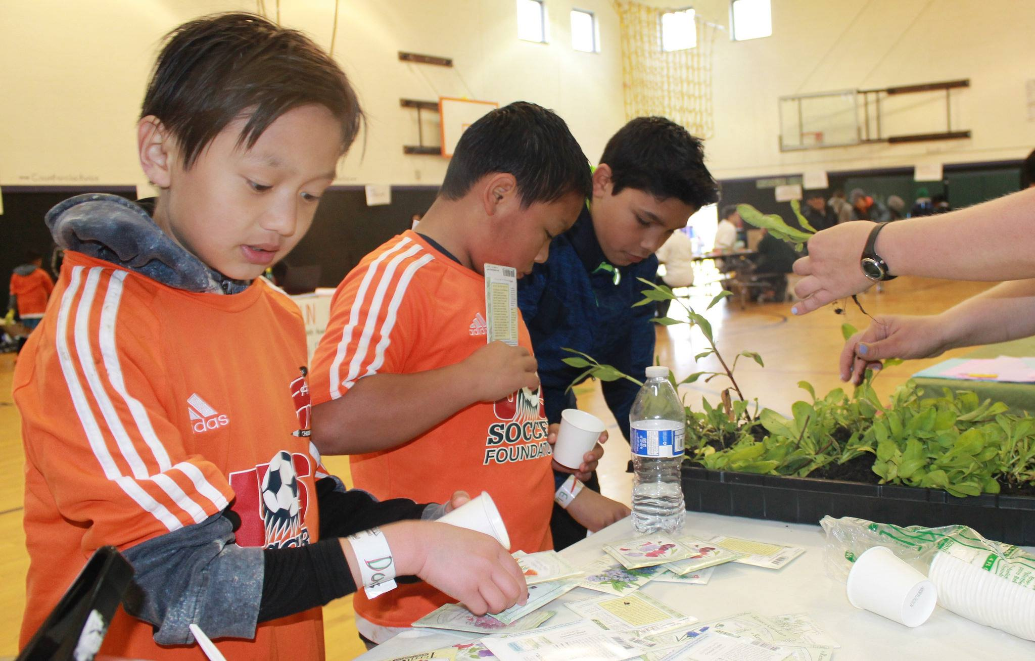Community Cup - Resource booth - kids looking at seed starts and plants